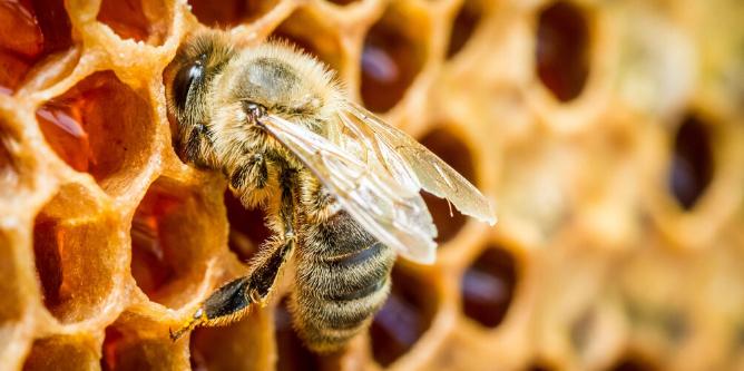 Negocios rentables miel