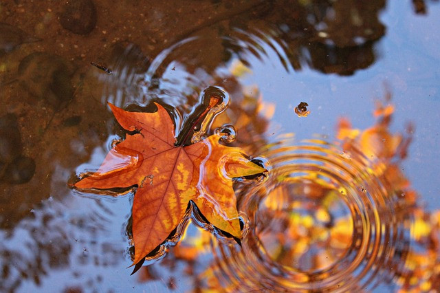 leaves-4232572_640