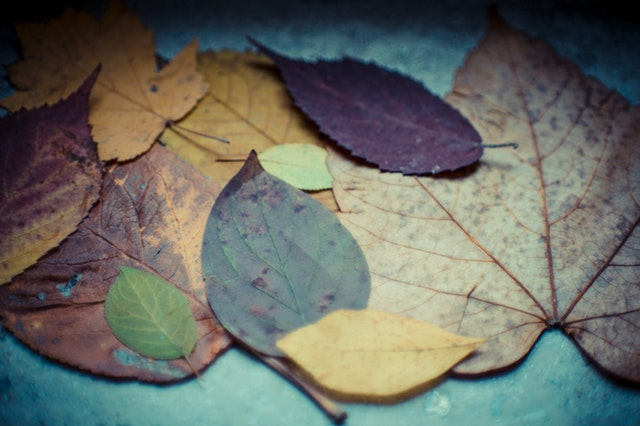 beautiful-blur-close-up-230863