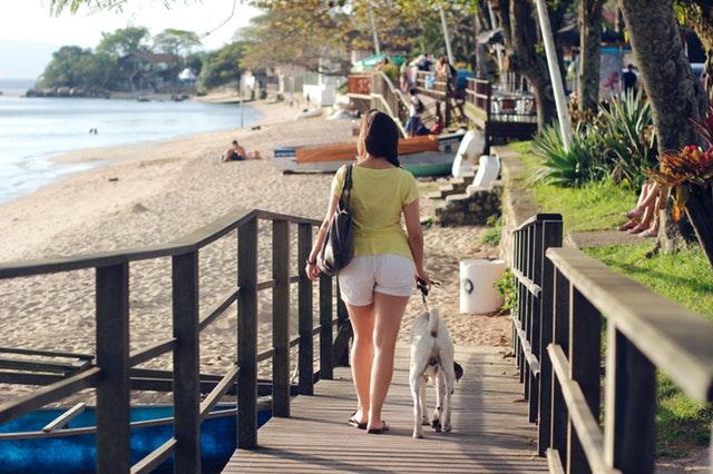 animal-back-view-bag-2089783