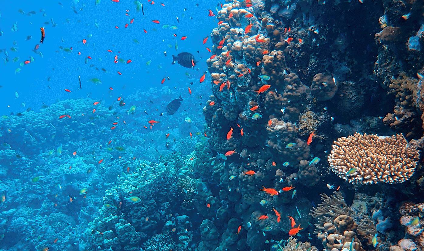 gran arrecife maya en tulum